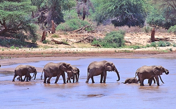 Elephants in Selous